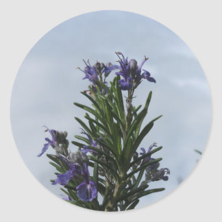 Rosemary plant with flowers against the sky classic round sticker