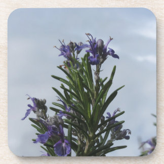 Rosemary plant with flowers against the sky coaster