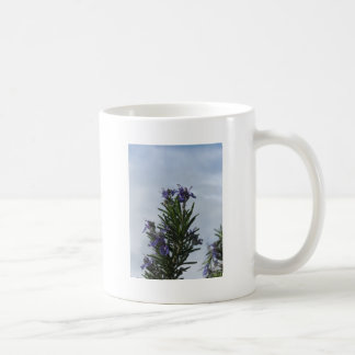 Rosemary plant with flowers against the sky coffee mug