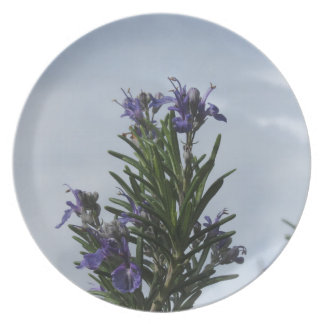 Rosemary plant with flowers against the sky dinner plates