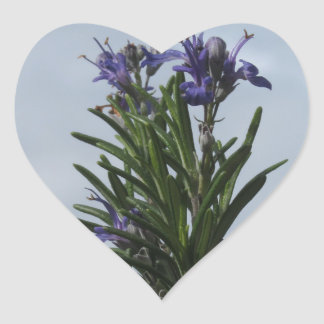 Rosemary plant with flowers against the sky heart sticker