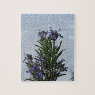 Rosemary plant with flowers against the sky jigsaw puzzle