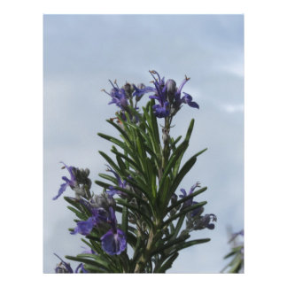 Rosemary plant with flowers against the sky letterhead