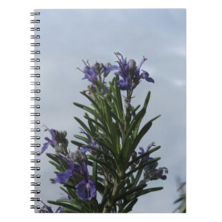 Rosemary plant with flowers against the sky notebook