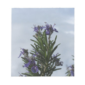 Rosemary plant with flowers against the sky notepad