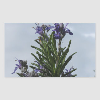 Rosemary plant with flowers against the sky sticker