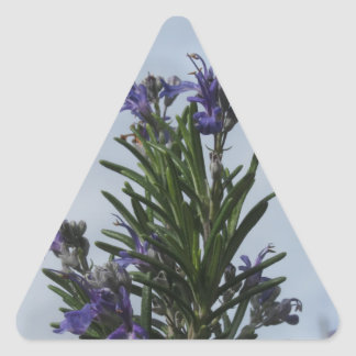 Rosemary plant with flowers against the sky triangle sticker
