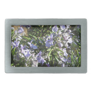 Rosemary plant with flowers in Tuscany, Italy Belt Buckles