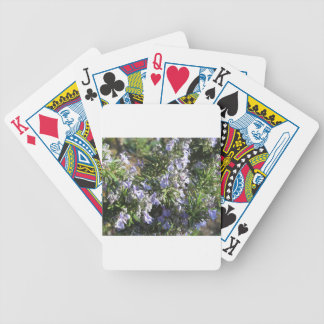 Rosemary plant with flowers in Tuscany, Italy Bicycle Playing Cards