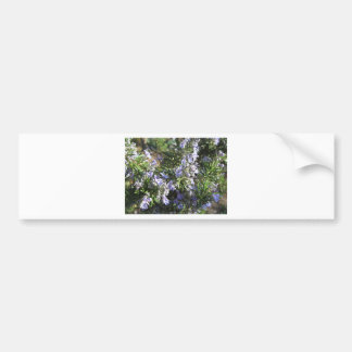 Rosemary plant with flowers in Tuscany, Italy Bumper Sticker