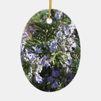 Rosemary plant with flowers in Tuscany, Italy Ceramic Oval Ornament