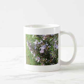 Rosemary plant with flowers in Tuscany, Italy Coffee Mug