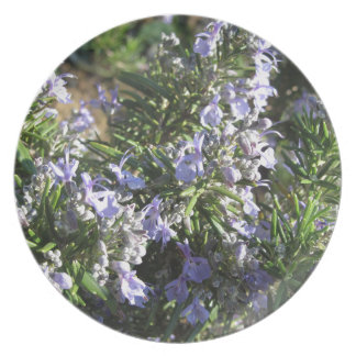 Rosemary plant with flowers in Tuscany, Italy Dinner Plates