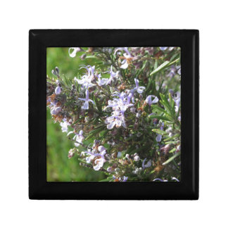 Rosemary plant with flowers in Tuscany, Italy Gift Box