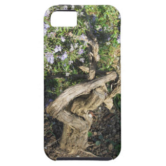 Rosemary plant with flowers in Tuscany, Italy iPhone 5 Covers