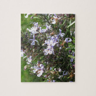 Rosemary plant with flowers in Tuscany, Italy Jigsaw Puzzle