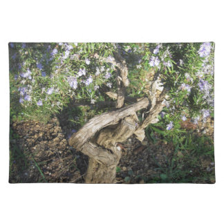 Rosemary plant with flowers in Tuscany, Italy Placemat