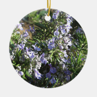 Rosemary plant with flowers in Tuscany, Italy Round Ceramic Ornament