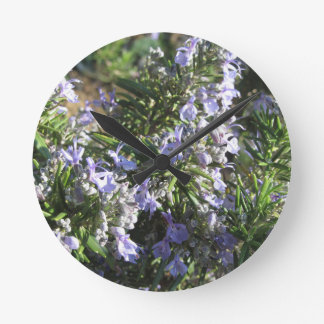 Rosemary plant with flowers in Tuscany, Italy Round Clock