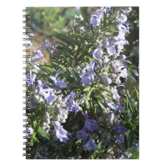 Rosemary plant with flowers in Tuscany, Italy Spiral Notebook