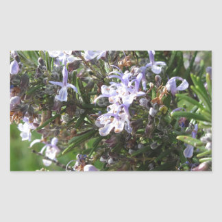 Rosemary plant with flowers in Tuscany, Italy Sticker