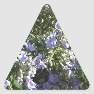 Rosemary plant with flowers in Tuscany, Italy Triangle Sticker