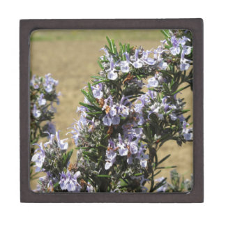 Rosemary plant with flowers premium jewelry boxes