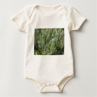 Rosemary plant with flowers . Tuscany, Italy Baby Bodysuit