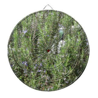 Rosemary plant with flowers . Tuscany, Italy Dartboard
