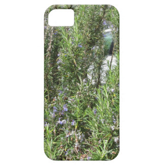 Rosemary plant with flowers . Tuscany, Italy iPhone 5 Cases