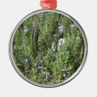 Rosemary plant with flowers . Tuscany, Italy Silver-Colored Round Ornament