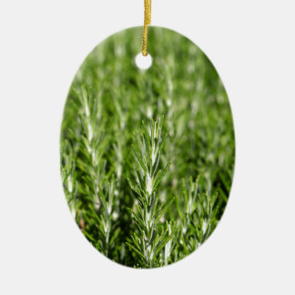 Rosemary (Rosmarinus officinalis) branches Ceramic Oval Ornament