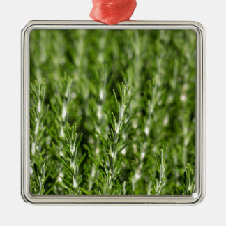 Rosemary (Rosmarinus officinalis) branches Silver-Colored Square Ornament
