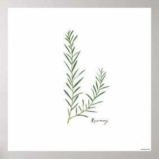 Rosemary Stem Illustration |  Herb Botanical Print