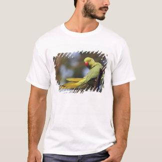 Roseringed Parakeet,Keoladeo National Park, T-Shirt