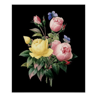 Roses bouquet Redoute black dramatic background Poster