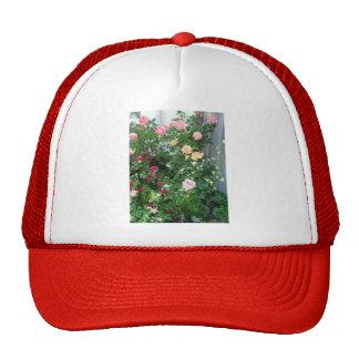 roses de jardin casquettes de camionneur