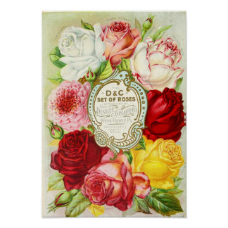 Roses Dingee and Conard Company Seed Catalog Poster