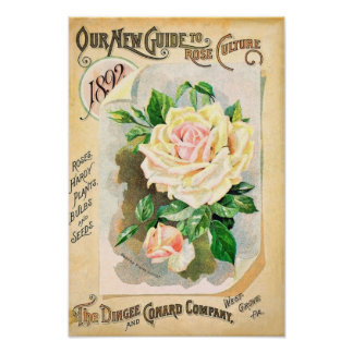 Roses Dingee and Conard Vintage Seed Catalog Poster