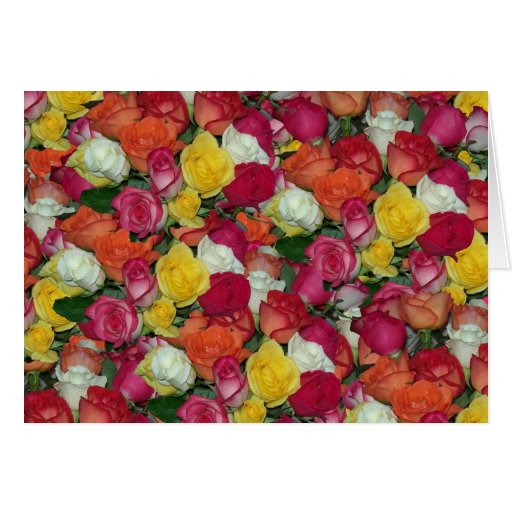 roses galore greeting cards