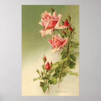Roses roses vintages de jardin pour la poster