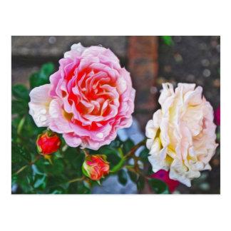 Roses sous la pluie cartes postales