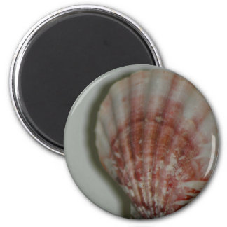 Rosy Seashell magnet