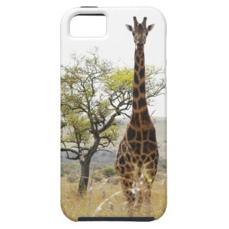 Rothschild Giraffe endangered species iPhone 5 cas iPhone 5 Cover