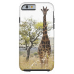 Rothschild Giraffe endangered species iPhone 6 cas iPhone 6 Case
