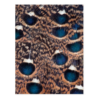 Rothschild Peacock-Pheasant Feathers Postcard
