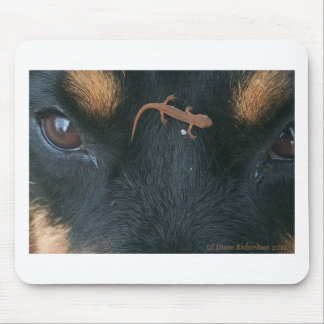 Rottweiler and salamander mouse pad