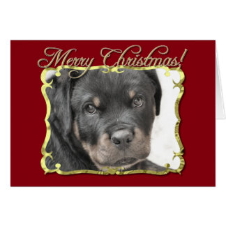 Rottweiler dog card