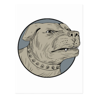 Rottweiler Guard Dog Head Aggressive Drawing Postcard