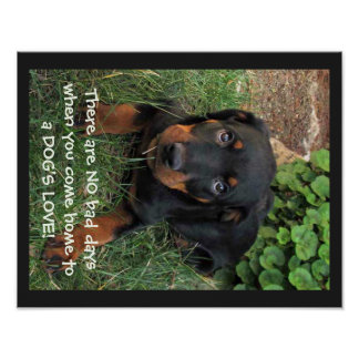 Rottweiler Guilty Puppy Dog's Love Poster